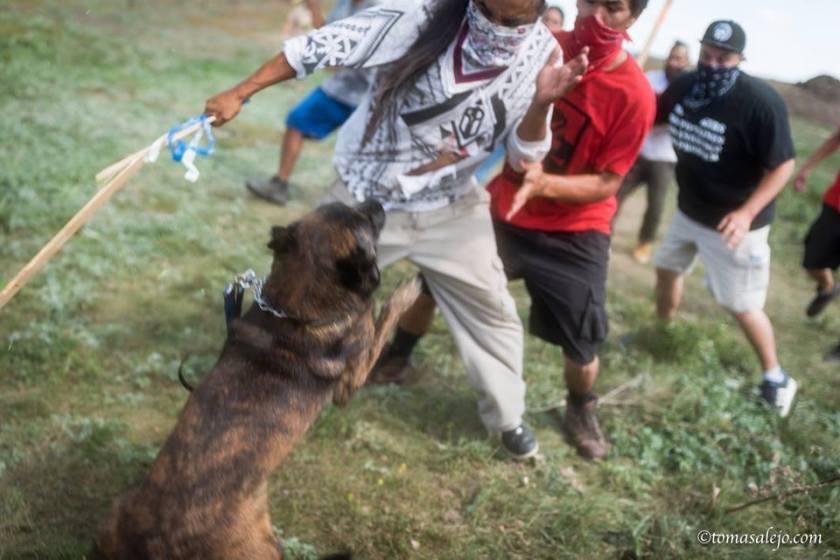 a dog attack